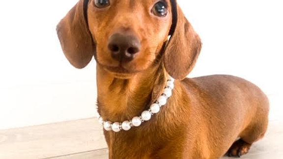 Sausage Dog Box Necklace