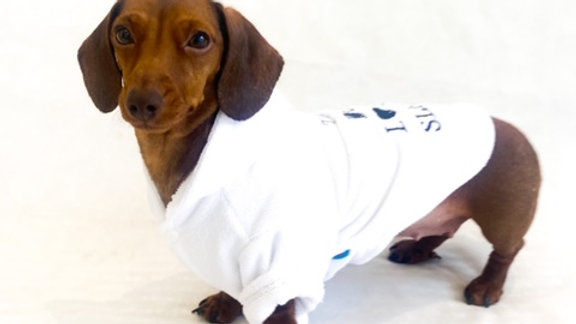 Sausage Dog Box, Dachsund Dressing Gown / Bath Robe