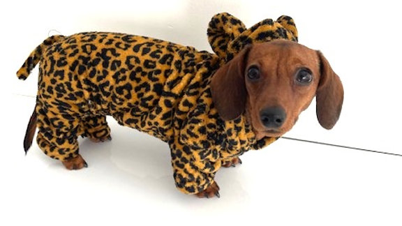 Sausage Dog Box Dachshund Cheetah Outfit