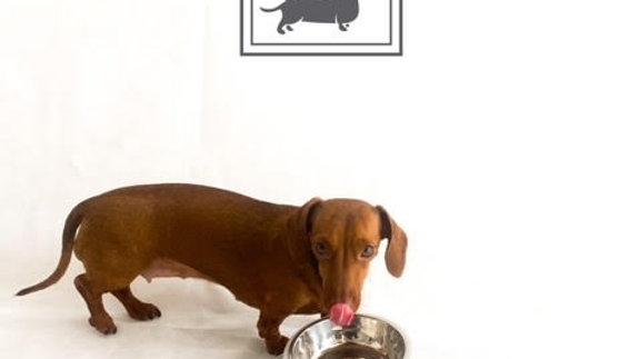 Sausage Dog Box Tilted Bowl