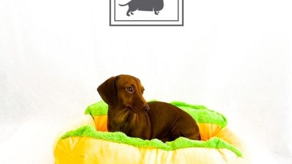 Sausage Dog Box, Dachshund Dachshund Hot Dog Bed
