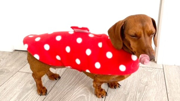 Sausage Dog Box Red Polka Dot 'Minnie' Fleece Coat