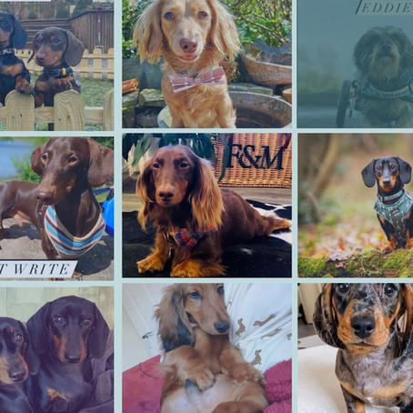 Sausage Dog Box - Top Models