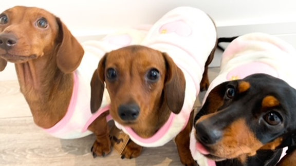 Sausage Dog Box Dachshund Pink Heart Cute Cosy Dachshund PJ's / Jumper