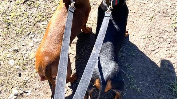 Sausage Dog Box Double Dog Lead