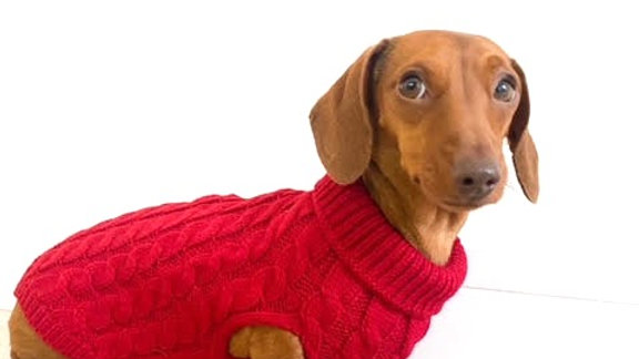 Sausage Dog Box Cosy Red Cable Knit Dachshund Jumper