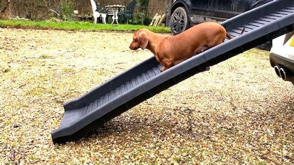 Sausage Dog Box, Dachshund Folding Car Ramp for Dachshund Sausage Dog