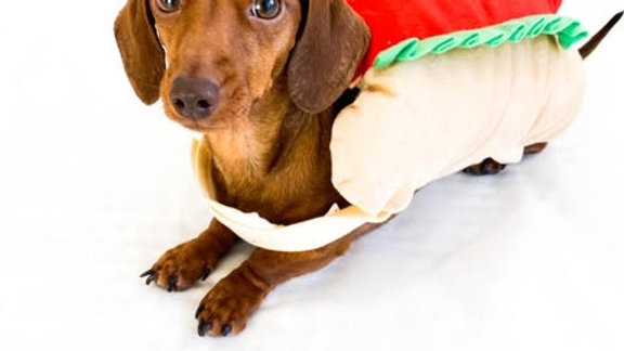 Sausage Dog Box Hot Dog Dress Up Outfit