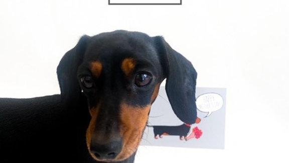 "Sausage Dog Box Dachshund ""Happy Mother's Day"" Card"