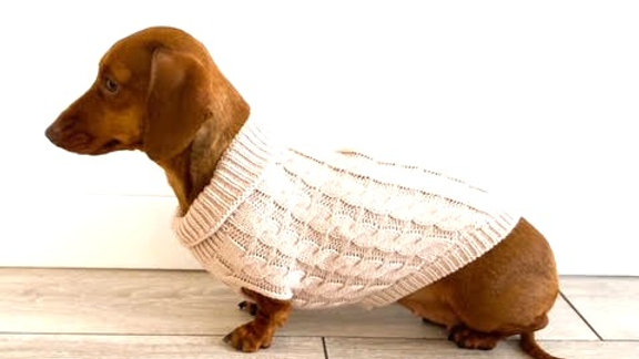Sausage Dog Box Oatmeal Cosy Cable Knit Dachshund Jumper