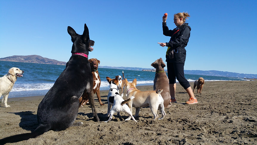 San Francisco best professional dog walkers dog walking Marina Cow Hollow Pacific Heights Laurel Heights Russian Hill.