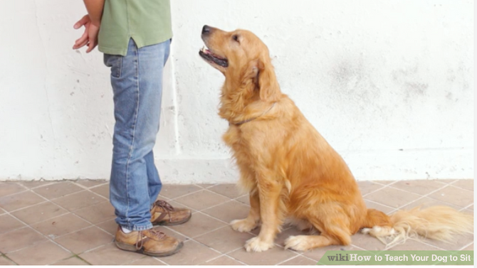 https://www.wikihow.com/Teach-Your-Dog-to-Sit