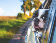 "Check out our feature in Redfin's article: ""Moving with Pets: Expert Tips for a Successful Move"""