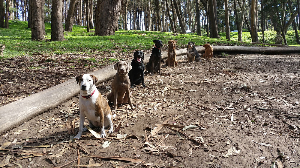 Best Dog Walker in San Francisco 2015 Bay Woof's Beast Of The Bay Awards