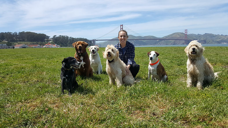 San Francisco best dog walkers best dog walking