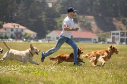 dog walking walker job work career