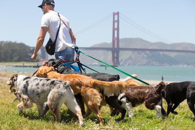 Now hiring dog walker position