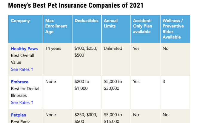 How Pet Insurance Works and The Best Providers