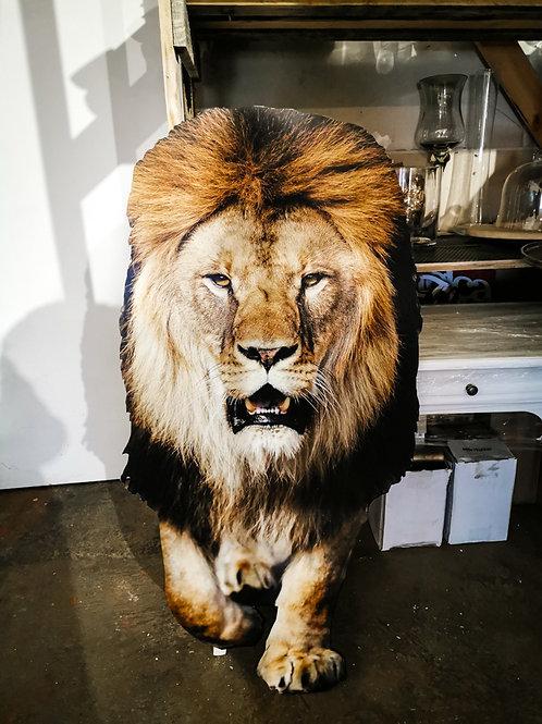 Lauva #DF17