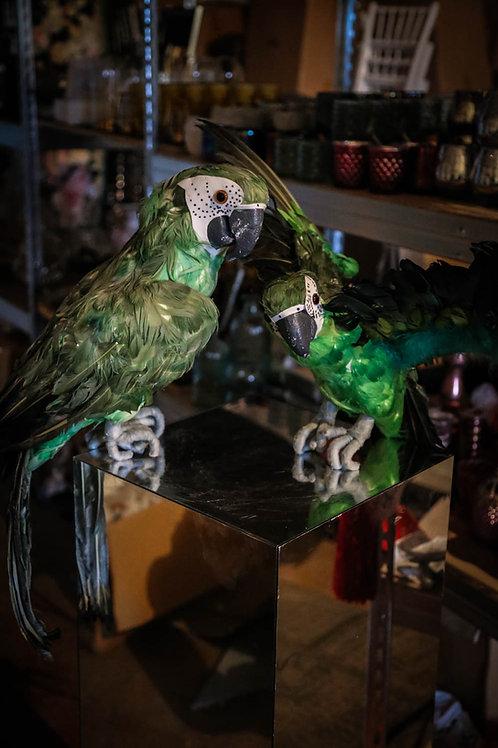 Papagailis #DF11