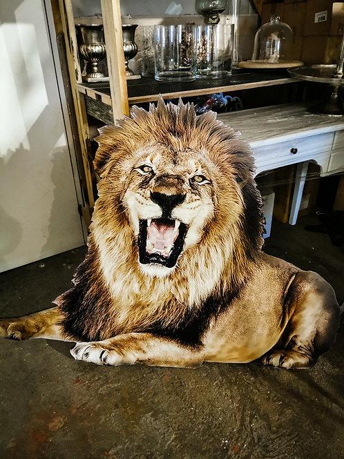 Lauva #DF16