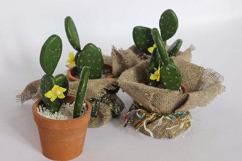 Kaktusi #MD02