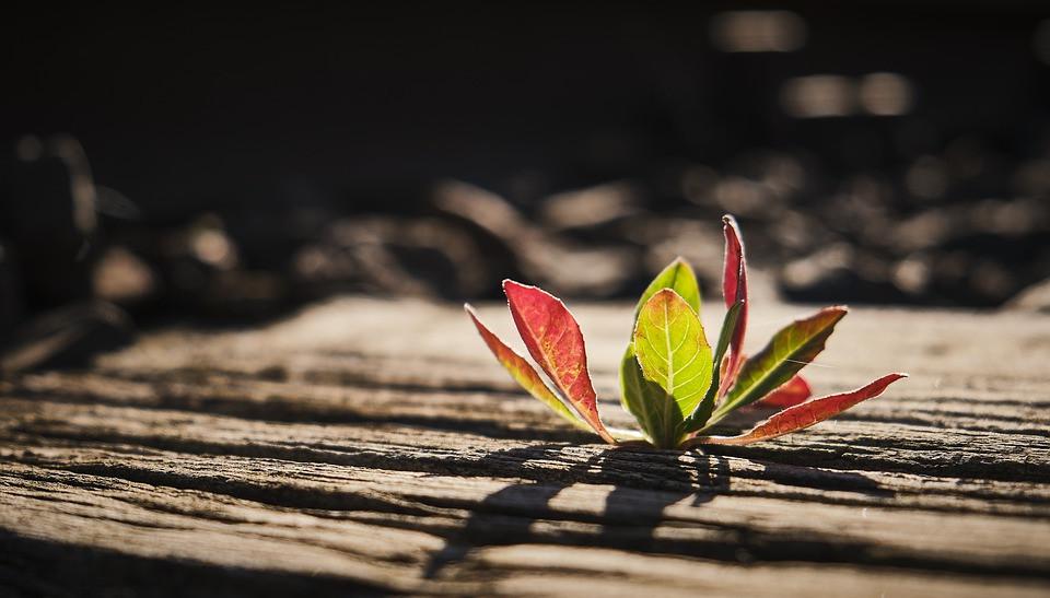 Les plantes du stress