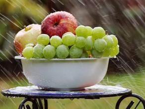 Monodiète et cure de raisin