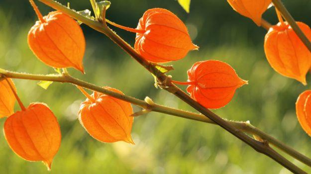 Plantes de la vitalité et de l'énergie