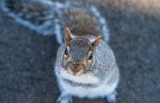Squirrels are people 2