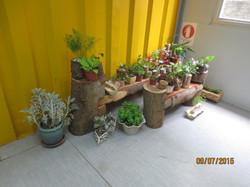 室內小花園