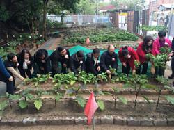 主禮嘉賓到開幕禮的農田採摘收成蔬菜