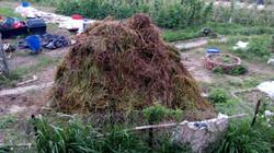 草碎送往有機農場.jpg