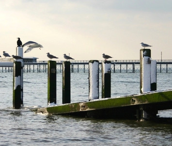 Birds By Pier