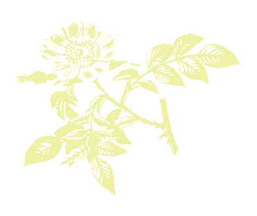 greenflower-13-13.png