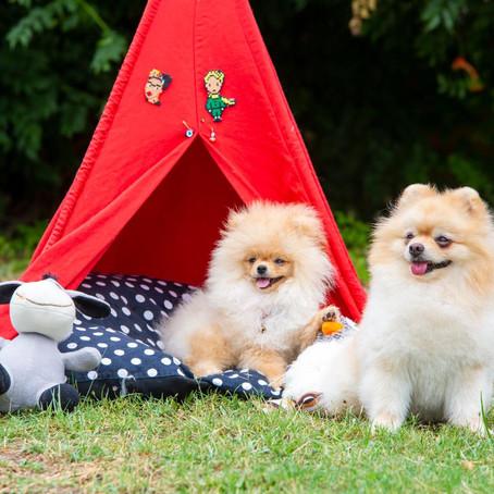 Köpek Çadırı Kullanımı Köpekler İçin Neden Önemlidir?