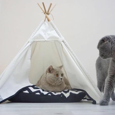 Neden Teepee House Kedi Çadırı?
