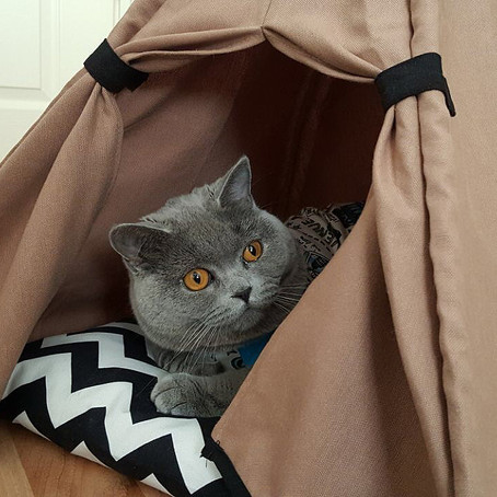 Kedi Çadırı Kullanımı Kediler İçin Neden Önemlidir?