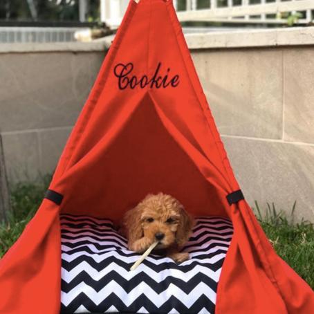 Köpek Yatağı Seçimi ve Köpek Sağlığı Arasındaki İlişki