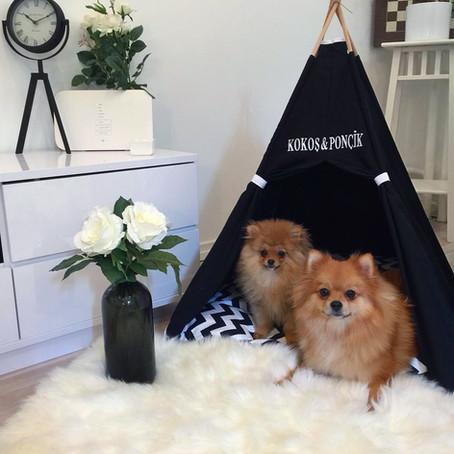 Köpek veya Kedi çadırı alırken nelere dikkat edilmeli ?