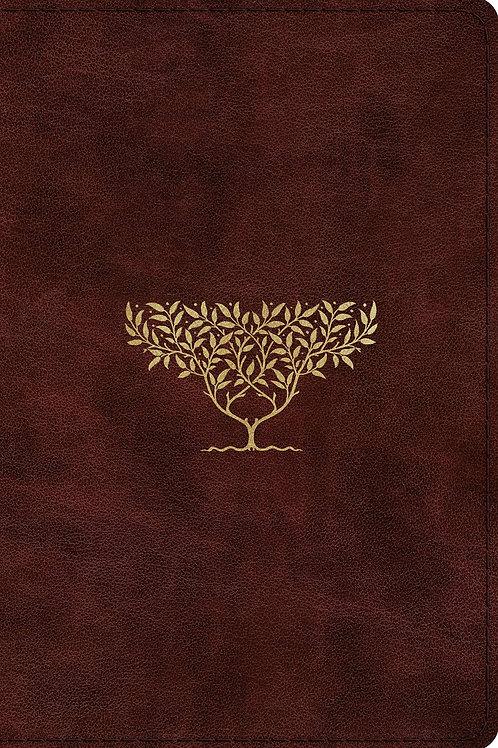 ESV Compact Burgundy Bible