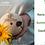 Thumbnail: COCO VERDE DESCASCADO - EDEN COCO 400ML