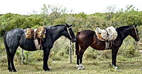 caballos3.jpg
