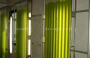 Photobioreacteurs pour cultiver les microalgues