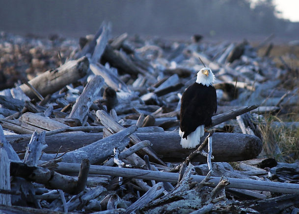 eagle-1926026.jpg