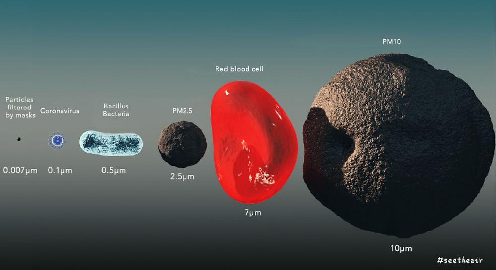 Virus particle size comparison