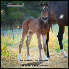 Alta Christiano filly out of BBS Inspirations