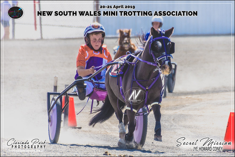 Champion of Champions 2019 Jye Howard Coney with Secret Mission during the NSW Mini Trots Championships 2019