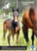 Horse Photography by Clarinda Park Photograhy   Pia, a Heston Blue Chip filly out of Soho Leigh. Cover Photo of Australasian Standardbred Stallion Guide 2017-2018