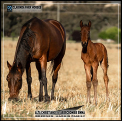 Alta Christiano colt out of Abercrombie Emma